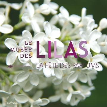 Lilas - Syringa - 'Alba Virginalis'