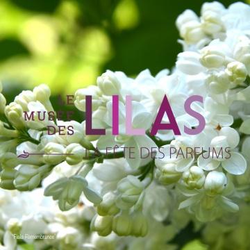 Lilas - Syringa - 'Fiala Remembrance'
