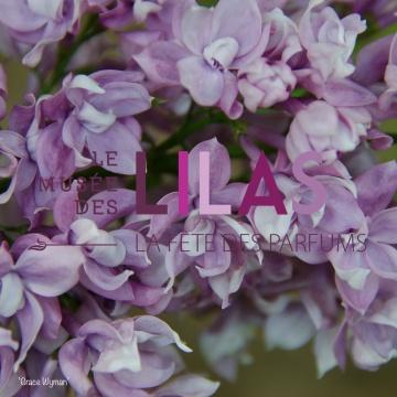 Lilas - Syringa - 'Grace Wyman'