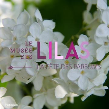 Lilas - Syringa - 'Independence'