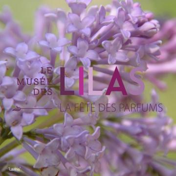 Lilas - Syringa - 'Lavinia'