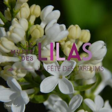 Lilas - Syringa - 'Marie Finon'